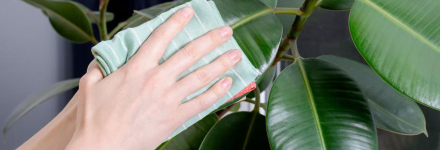 briller vos plantes vertes